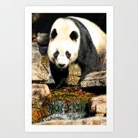 Wang Wang Art Print