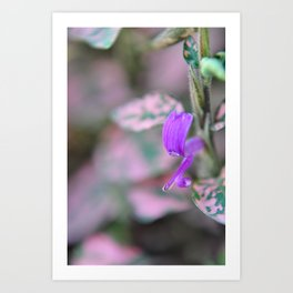 purple in my garden Art Print