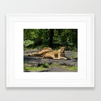 lions Framed Art Prints featuring Lions by Elisa Camera