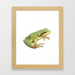 European Tree Frog Framed Art Print