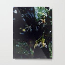 Star jasmine Metal Print