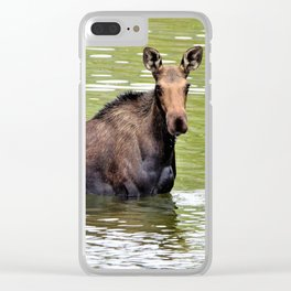 Majestic Moose in Colorado by Reay of Light Clear iPhone Case