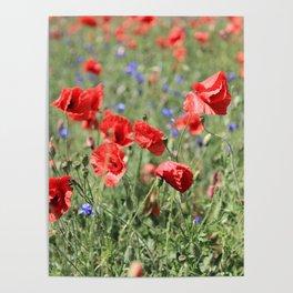poppy flower no9 Poster