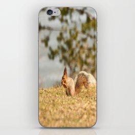Squirrel's Lunch Break #decor #society6 iPhone Skin