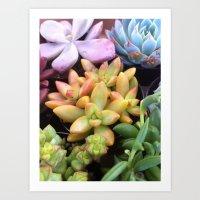 Succulent Rainbow Art Print