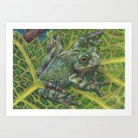 Gray Treefrog Art Print