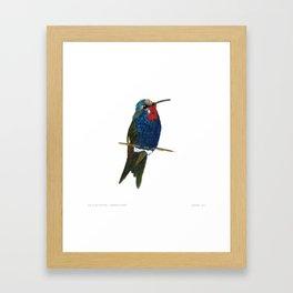 Blue-tufted Starthroat Framed Art Print