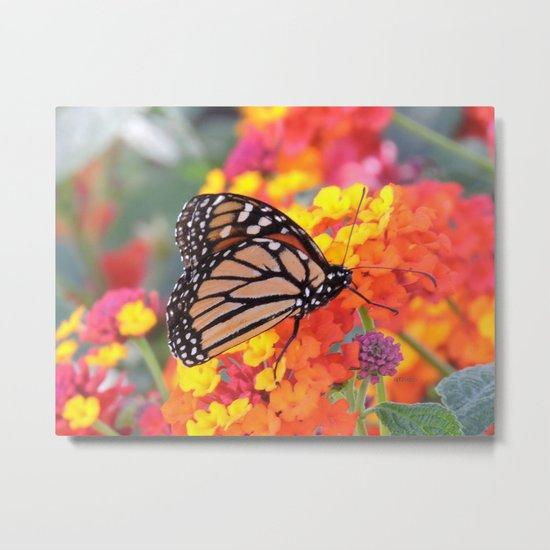 Monarch Feeding on Lantana Metal Print