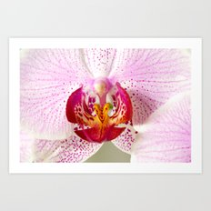 Pink points orchid 35 Art Print