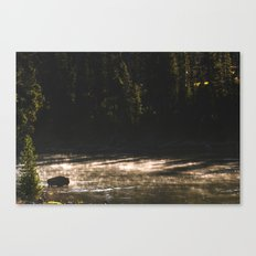 Yellowstone National Park - Bison  Canvas Print