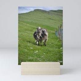 faroese sheep Mini Art Print