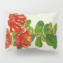 Rhododendron Retusum Vintage Botanical Floral Flower Plant Scientific Illustration Pillow Sham