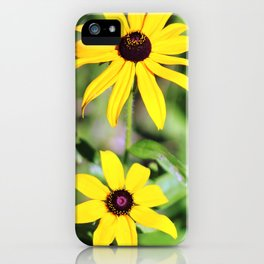 Brown Eyed Susan in Horicon Marsh in Wisconsin iPhone Case