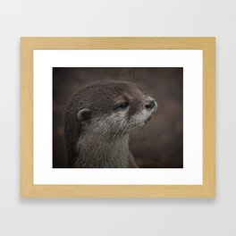 Portrait Of A Young Otter Framed Art Print