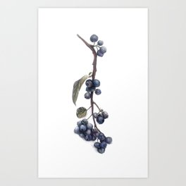 Blue berry Art Print