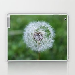 Dandilion Laptop & iPad Skin