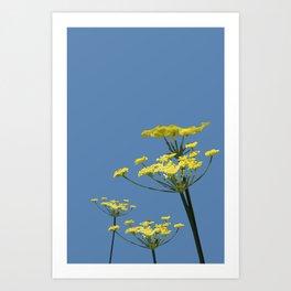 Fennel flowers Art Print