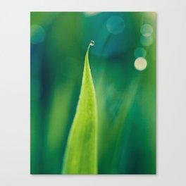 grass and bokeh Canvas Print