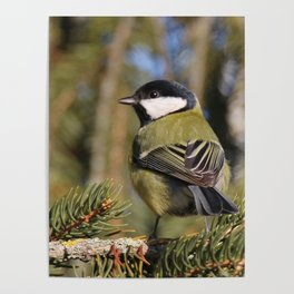 Parus major in its environment Poster