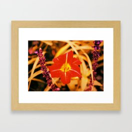 Tungsten Flower (1) Framed Art Print