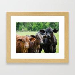 baby cows  Framed Art Print