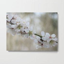 Almond Blossom Series 7 Metal Print
