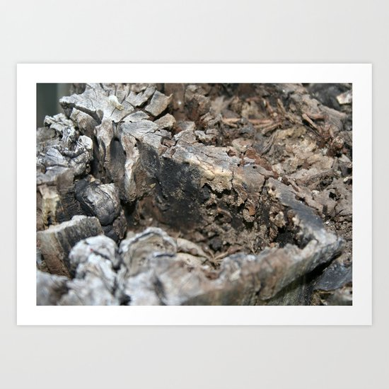 Textured Tree Stump Of Eucalyptus Tree  Art Print