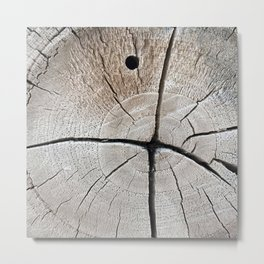 dry wood branch Metal Print