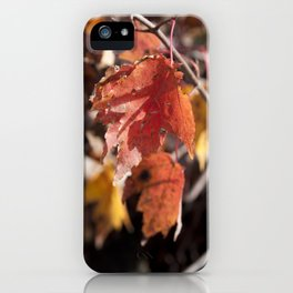 Fall in Manchester, NH iPhone Case