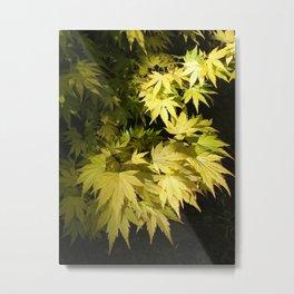 Acer Palmatum Metal Print