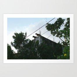 Roof dogs. Art Print
