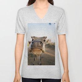 Curious Calf Unisex V-Neck