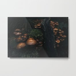 Dark woods Metal Print