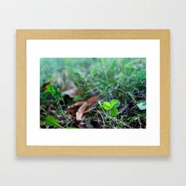 Lonely Clover Framed Art Print