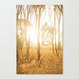 A Bush Sunset Canvas Print