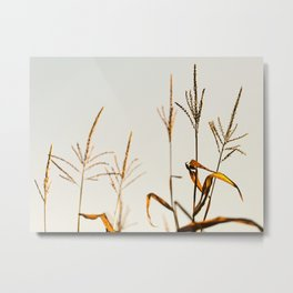 Corn Field 12 Metal Print