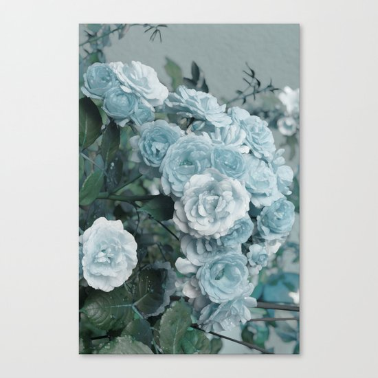 A cloud of blue roses Canvas Print