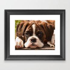 Alfie II Framed Art Print