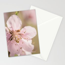 Peach Blossoms 10 Stationery Cards