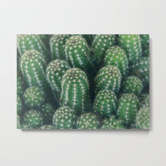 Cactus nature XI Metal Print