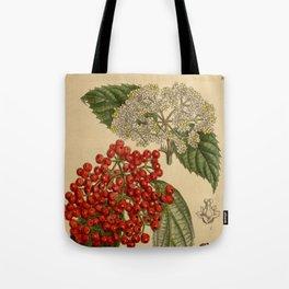 Viburnum betulifolium, Adoxaceae Tote Bag