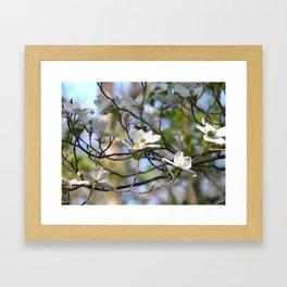Dogwood Tree Framed Art Print