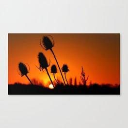 Teasel and the Sunrise Canvas Print