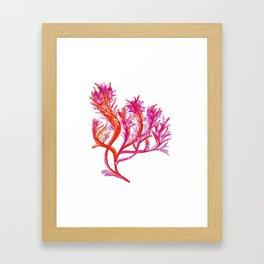 Purple Kelp Framed Art Print