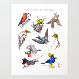 Spring Birds of the East Coast Art Print