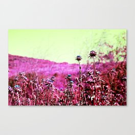 Thornberry  Canvas Print