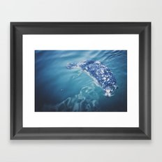 Wild Harbor Seal Framed Art Print