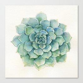 Succulent - Echeveria Canvas Print
