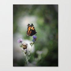 Schmetterling Canvas Print