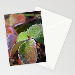 Strawberry frost Stationery Cards